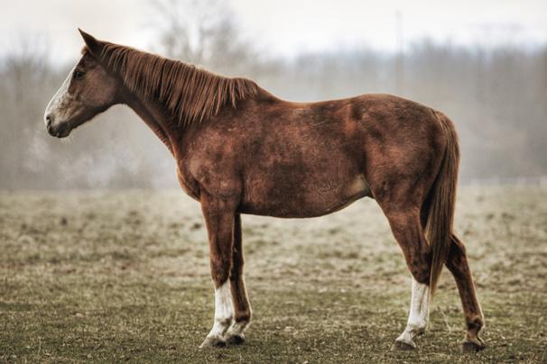 https://blog.darth.ch/wp-content/uploads/2008/11/cheval.jpg