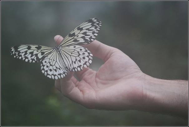 https://blog.darth.ch/wp-content/uploads/2008/12/geneve-papillon.jpg