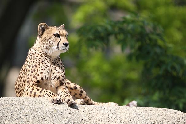 https://blog.darth.ch/wp-content/uploads/2009/02/geneve-zoo.jpg