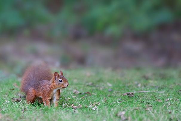 geneve-ecureille