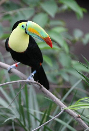 https://blog.darth.ch/wp-content/uploads/2010/04/geneve-toucansarc-en-ciel.jpg