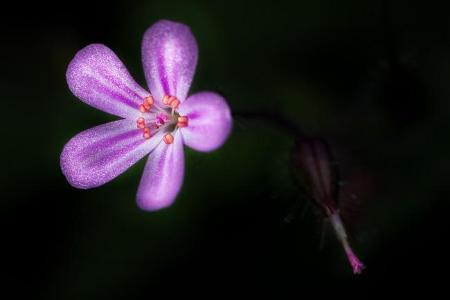 http://blog.darth.ch/wp-content/uploads/2011/08/fleur-dans-un-rayon-de-soleil-650.jpg