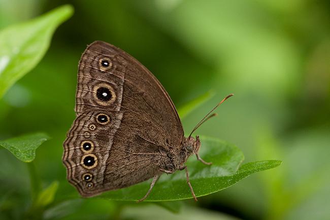http://blog.darth.ch/wp-content/uploads/2012/01/papillon-2.jpg