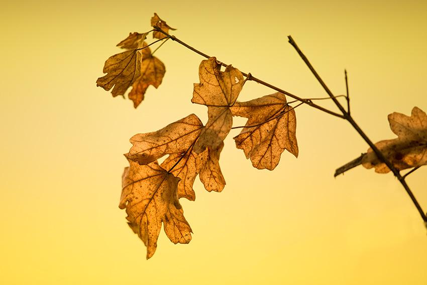 air-d-automne