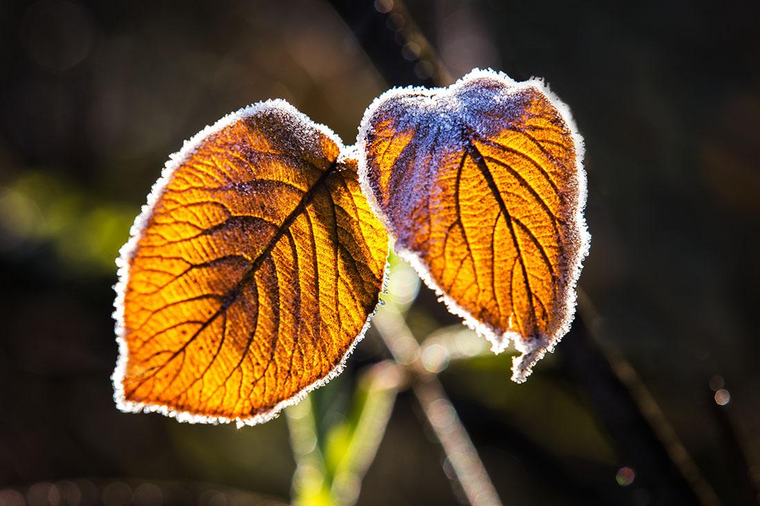 feuilles-d-automne