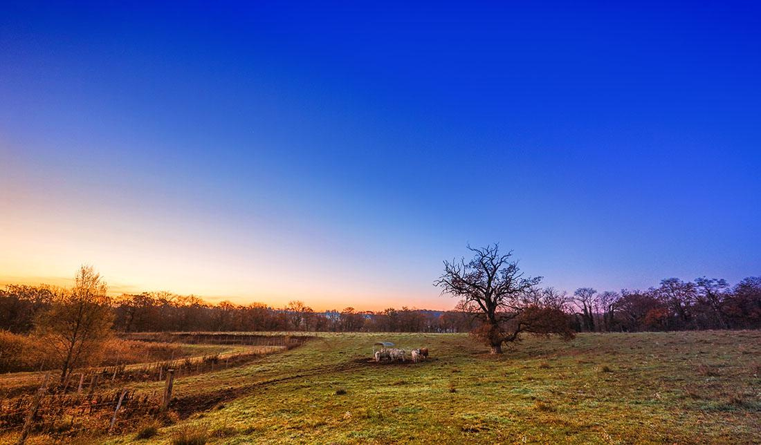 paysage-d-automne-2015