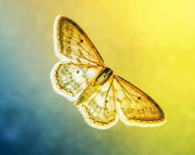 https://blog.darth.ch/wp-content/uploads/2017/05/papillon-en-vol-628x500.jpg